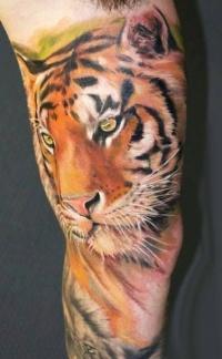 Tiger tattoo on arm